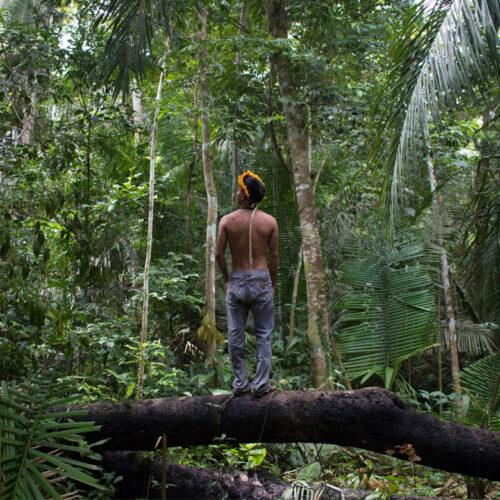 Amazônia (a força de dentro)